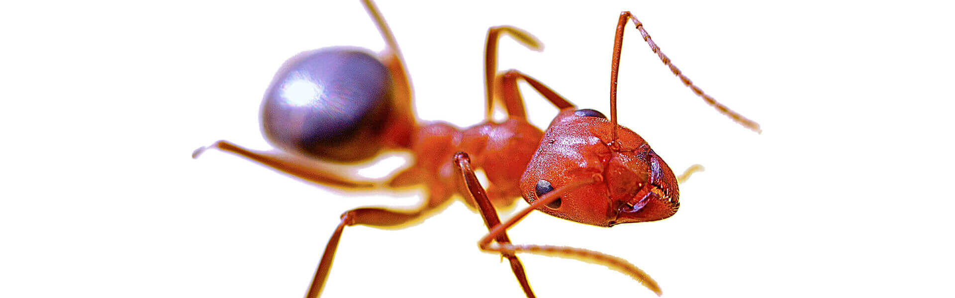 Ant close-up