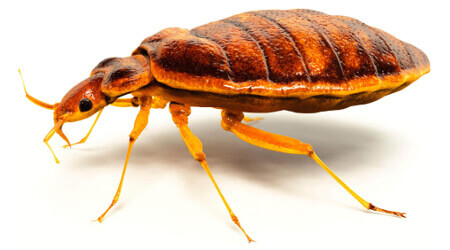 Bed Bug Treatment Sydney