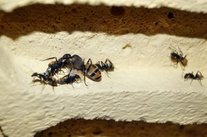 Ant queen and workers
